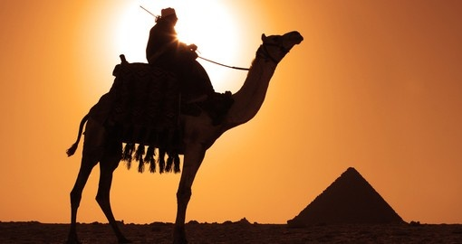 A Bedouin on a camel near the pyramids