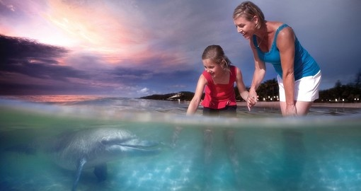 Meet a dolphin at Tangalooma Island Resort