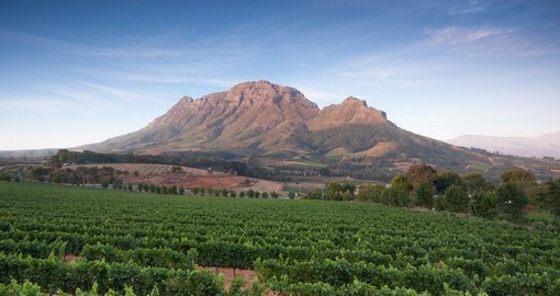 Visit picturesque Stellenbosch as part of your South African vacation