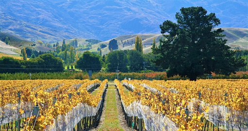 Visit New Zealand Vineyards on your trip to New Zealand