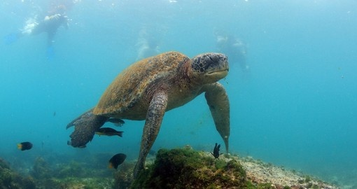 Enjoy snorkelling in the Galapagos