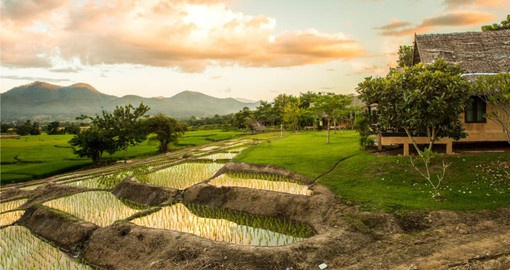Discover traditional rice farms during your Thai vacation