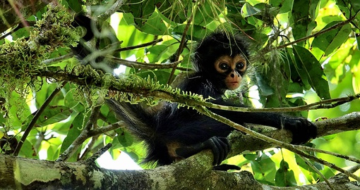 Baby Monkey in the surrounding jungle