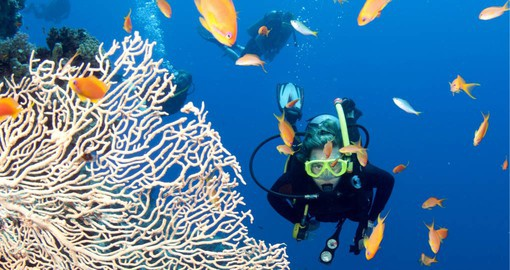 Discover Australia's incredible Great Barrier Reef