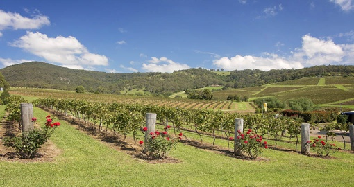 A vineyard in Hunter Valley, Australia's oldest wine producing region