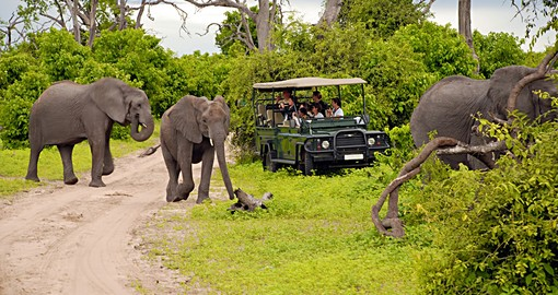 Chobe National Park Safari Botswana Safaris 2019 20