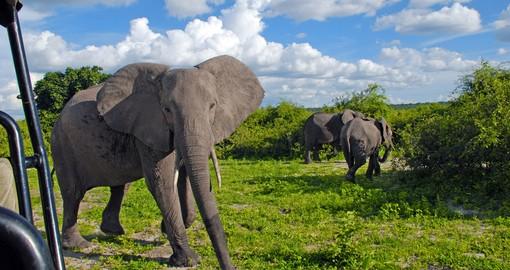 Linyanti Wildlife Reserve Botswana Safaris Amp Tours