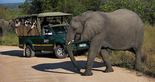 African Safari | African Safari Vacations & Tours 2019/20