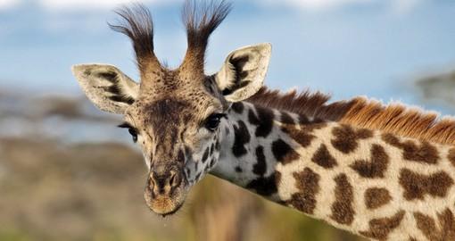 Tanzania Safari Amp Luxury Vacations African Safari 2019