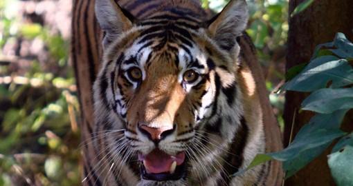 Indian Wildlife Luxury Safari India Touring Goway Travel