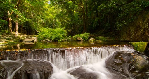 A tropical rainforest and water fall near Cairns