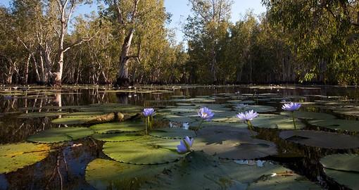 Kakadu National Park Australia Vacations 2018 19 Goway