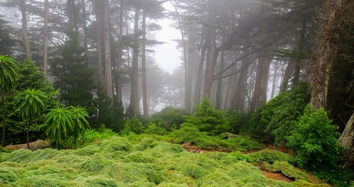 Foggy morning in the garden of Larnach Castle in Dunedin