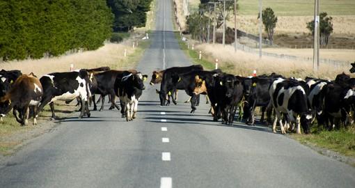 New Zealand Self Drive Tour Goway