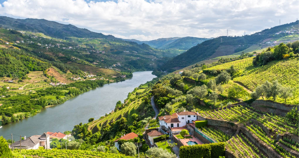 Douro River Vinelands in Portugal